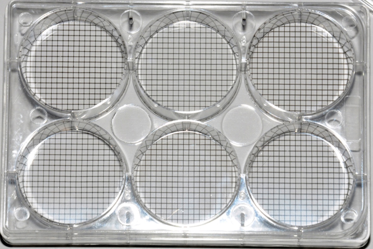 Multiple cell culture plate with grid bottom