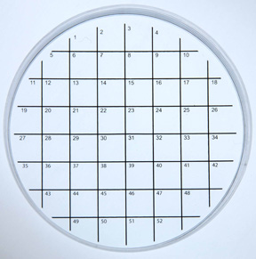 Cell Culture Dish ( Petri Dish) with Numbered grid