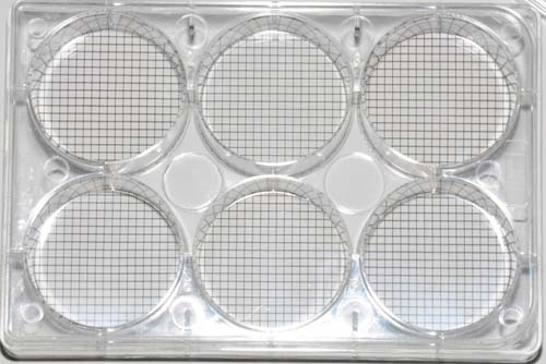 6 Well cell culture plate with grid bottom