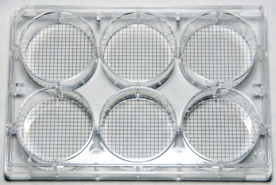 Multiwell Cell Culture Plate with Grids